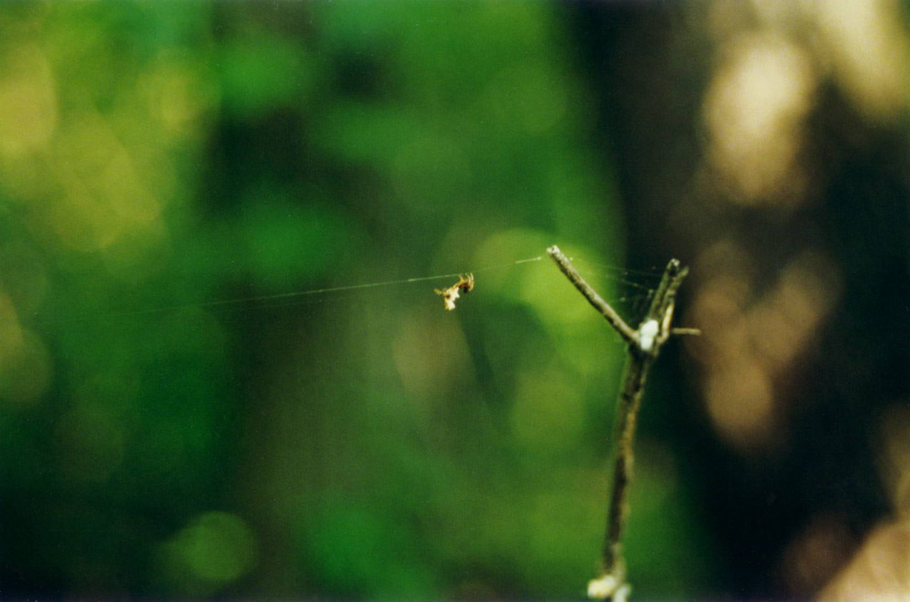 Spider Tightrope