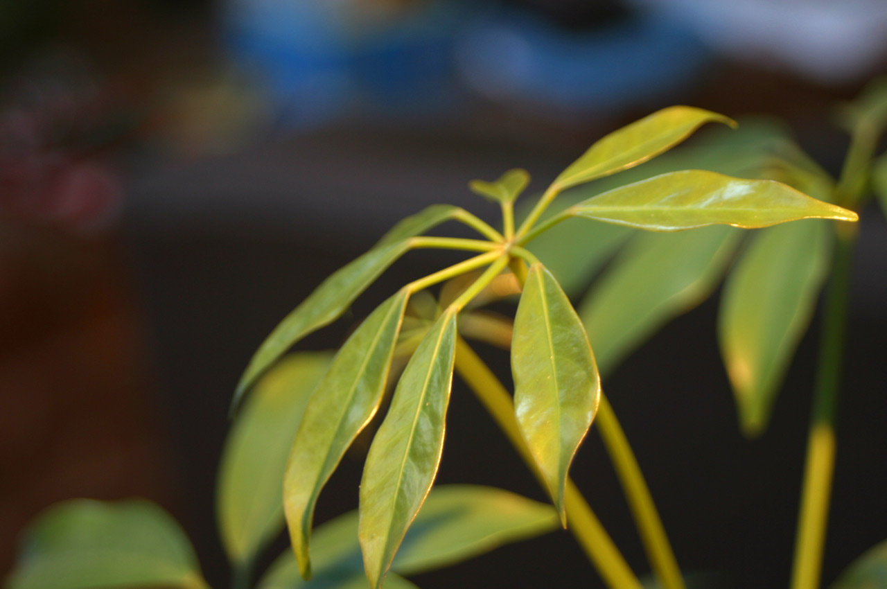 ... House Plant Identification By Leaf