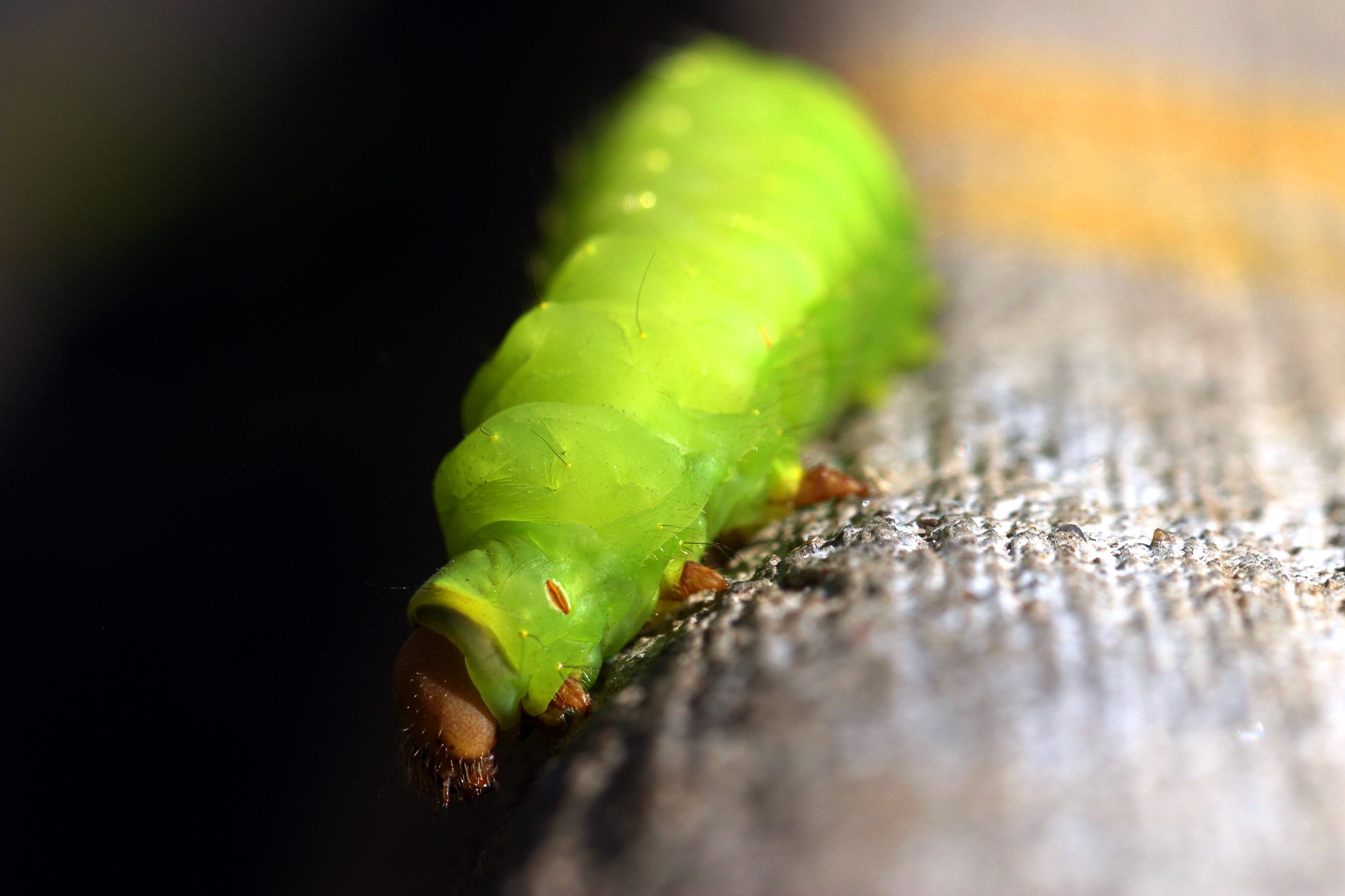 Caterpillar Looking
