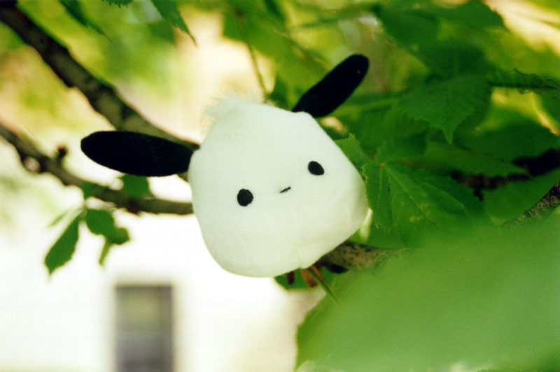 Pochacco in Tree